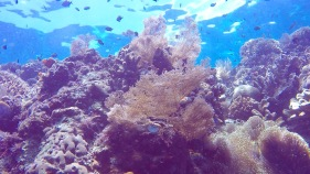 Amazing plants underwater in Bunaken.