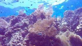 Amazing plants underwater in Bunaken.
