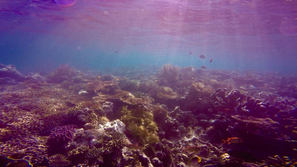 snorkeling in Derawan Dive Resort jetty.