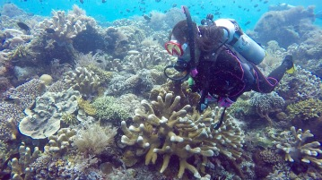 Dive into strong current no need move in Bunaken.