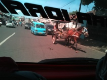 Many horses on the road in Manado.