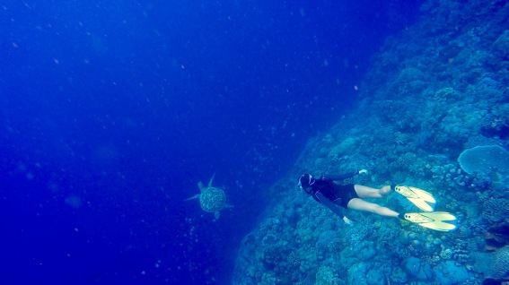 Free dive with turtle in Bunaken's big coral walls.