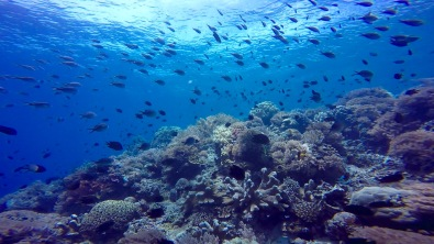 Snorkeling point in Bunaken.