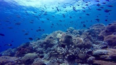 Snorkeling point in Bunaken.