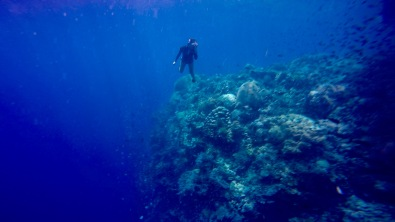 Free dive on big wall in Bunaken.