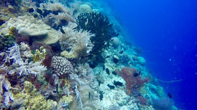 Scuba Dive site of big coral walls in Bunaken.