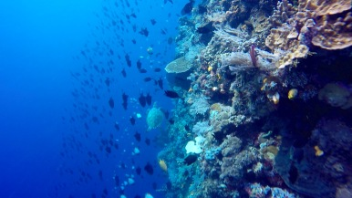 Stunning big coral walls, can't wait to dive deeper. Bunaken